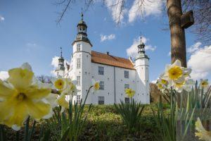 Strahlend weiß leuchtet das Ahrensburger Schloss im Licht der Frühlingssonne. Im Vordergrund blühen Narzissen