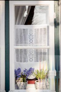 Blau blühende Hyazinthen stehen in einem sonnenbeschienenen, nostalgischen Sprossenfenster in Friedrichstadt